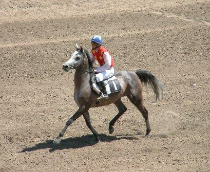 Click to Enlarge - Mara on her way to the start.  Her excellent race record made her Kazakhstan's choice as their 2005 WAHO trophy winner.