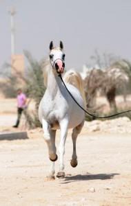 Naama Al Shaqab