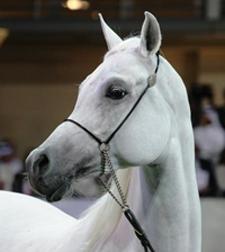 Amirat Al Shaqab