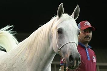 Amwaj Al Shaqab