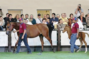 Batalah Al Shaqab and filly by Nader Al Shaqab