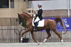 Vestival competing in dressage