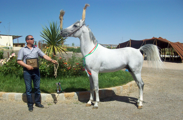 SAKHI, 2014 WAHO Trophy Winner, Algeria -  with his owner/breeder, Ahmed Feghouli