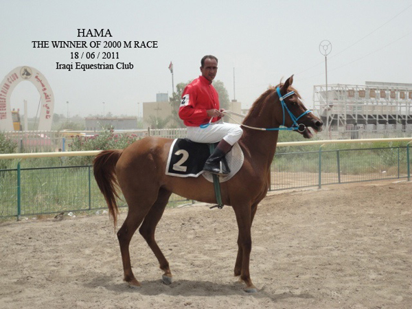HAMA, 2011 WAHO Trophy Winner, Iraq