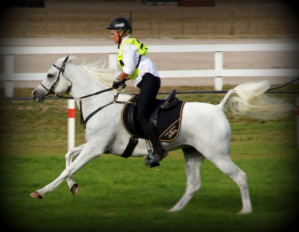 AA Mystic Charm, 2013 WAHO Trophy Winner, New Zealand, with rider Rosemary Revell