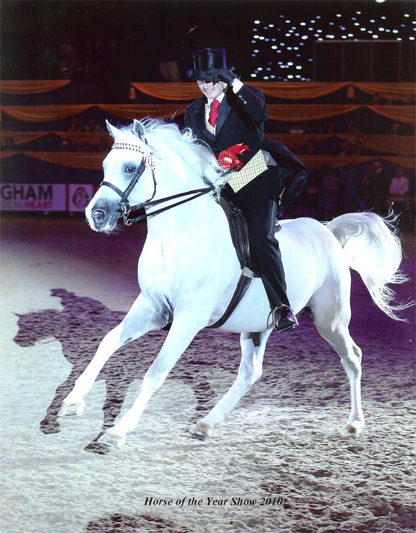 Silvern Prince ridden by Darren Crowe, winning the title of Ridden Arabian of the Year at the 2010 Horse of the Year Show.