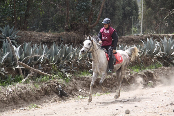 AR Misterio competing with his owner and rider, Mauricio Morillo.  photo: Pablo Albuja