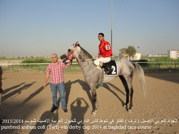Tarf, winner of the Iraq Derby.