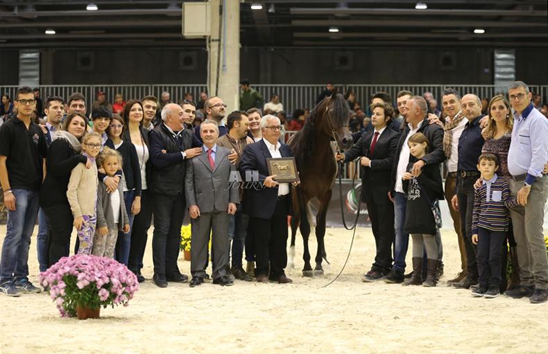 DALI - 2013 WAHO Trophy Winner, Italy