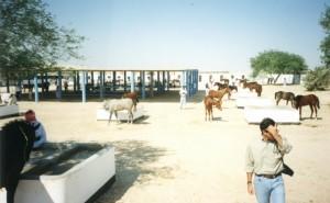 Sheikh Mohammed Bin Salman Al Khalifa's stud farm