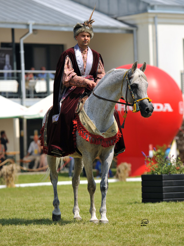 Piaff ridden in Polish historical costume by Mr. Artur Bieńkowski