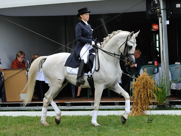 Dressage display given by Echo Apollo, ridden by his owner, Kaja Dembińska
