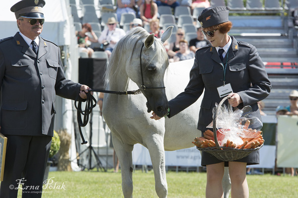 Palmeta, led by Dr. Marek Trela, receiving some carrots from the hands of Anna Stefaniuk.