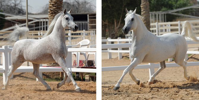 (left) Remal Al Nasser and (right) Ftoon Al Shaqab