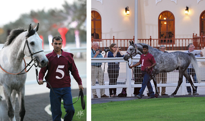 Race horse parade at Umm Qarn Stud