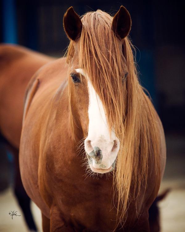 Bahraini Stallion Mlolshaan Marhoob