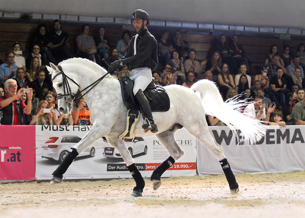 EXQUISITE's FANTASY performing Dressage up to high level.