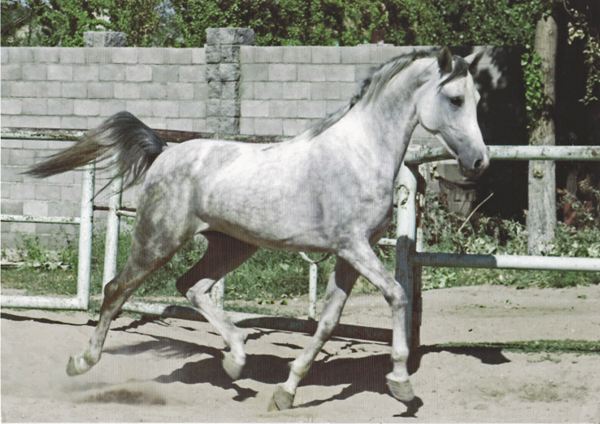 Kalken, 2015 WAHO Trophy Winner of Kazakhstan