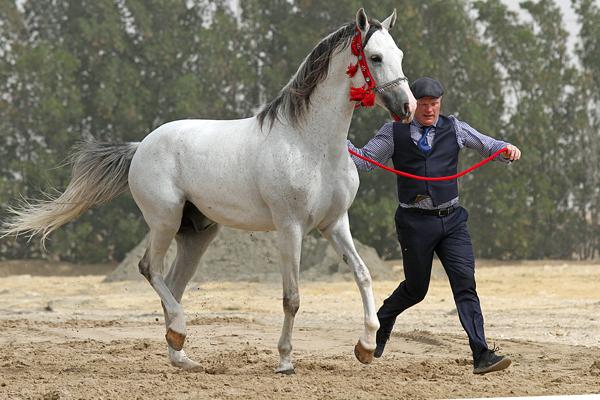 Hamdaany Al Faisal