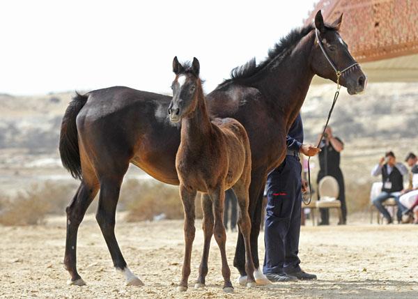 Mlolesh Samra (foal)
