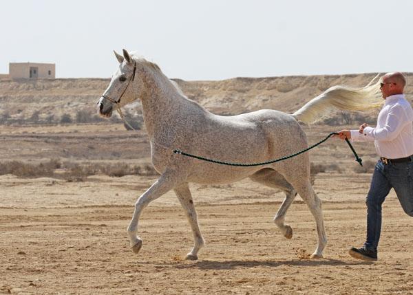 Musannah Bint Al Bahrain
