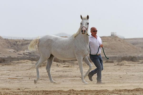 Saqlawieh Dhabiya