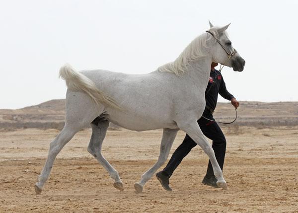 Shuwaimeh Al Zubarah